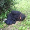 ضحايا جدد بوزان