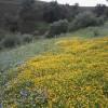 سحر فصل الربيع بدوار الشويجرات جماعة سيدي بوصبر