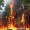 حريقان بغابة إيزارن بإقليم وزان في يوم واحد