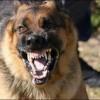 تعرض ستة أشخاص للعض من طرف كلب مسعور بمقريصات إقليم وزان