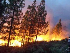 جانب من الحريق المندلع بغابة مولاي عبد القادر بجماعة زومي