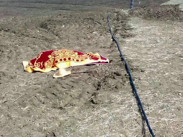 صورة الضحية