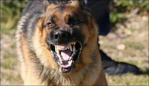 صورة كلب مسعور